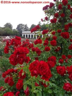 19 Roseto Villa Reale Monza