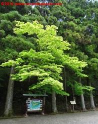 02-onshi-hakone-park