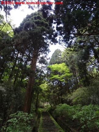 05-onshi-hakone-park
