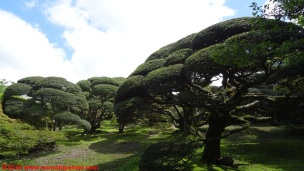 13-onshi-hakone-park