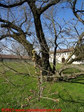 06-abbazia-mirasole