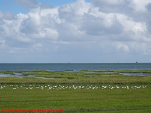 073 Isole Frisone
