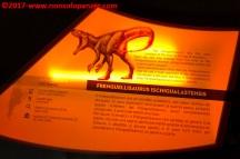 12 Dinosauri Giganti dell'Argentina