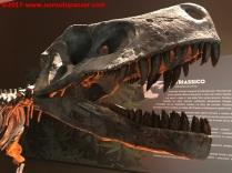 13 Dinosauri Giganti dell'Argentina