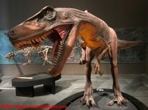15 Dinosauri Giganti dell'Argentina