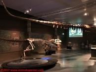 18 Dinosauri Giganti dell'Argentina
