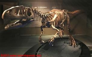 20 Dinosauri Giganti dell'Argentina