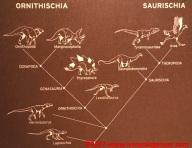 23 Dinosauri Giganti dell'Argentina