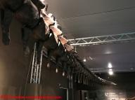 24 Dinosauri Giganti dell'Argentina