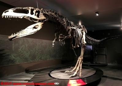 26 Dinosauri Giganti dell'Argentina
