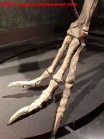 27 Dinosauri Giganti dell'Argentina