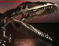 29 Dinosauri Giganti dell'Argentina