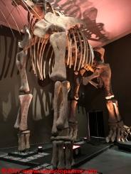 45 Dinosauri Giganti dell'Argentina