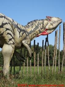 06 Dinosauri in Carne e Ossa