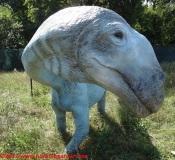 17 Dinosauri in Carne e Ossa