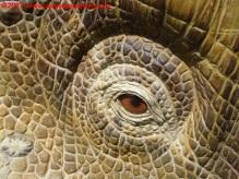 38 Dinosauri in Carne e Ossa