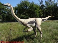 41 Dinosauri in Carne e Ossa