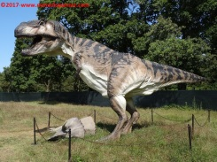 43 Dinosauri in Carne e Ossa
