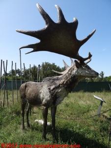 55 Dinosauri in Carne e Ossa