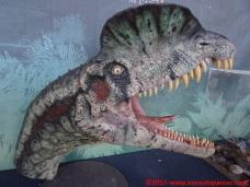 62 Dinosauri in Carne e Ossa