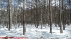 019 nikko national park