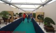 17 Raduno Internazionale Crespi - Bonsai