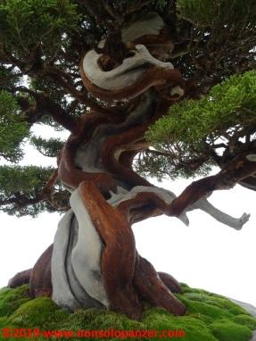 36 Raduno Internazionale Crespi - Bonsai