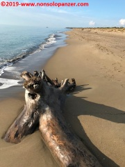 44 Parco Regionale della Maremma Secondo Giorno